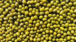 Mungbeans2